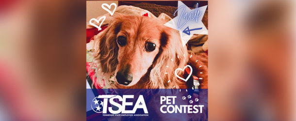 TSEA's Cute Pet Photo Contest